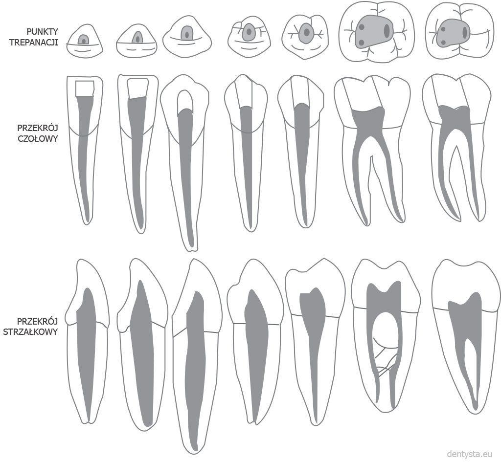 Kanały zębów dolnych